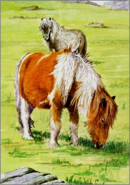 Pen - Shetland Pony