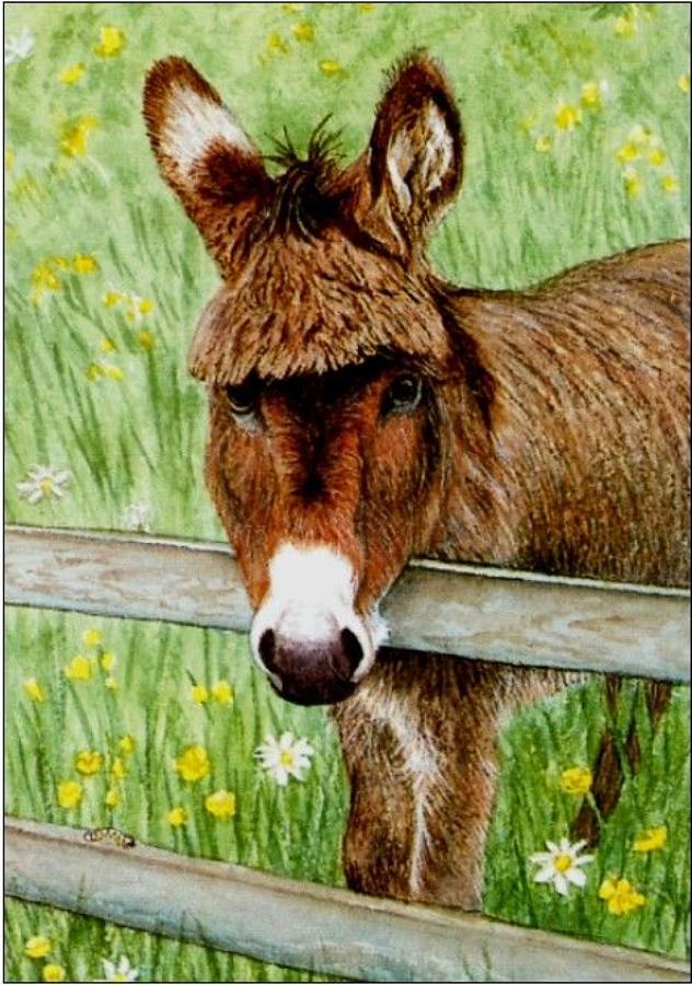 Pen - Donkey