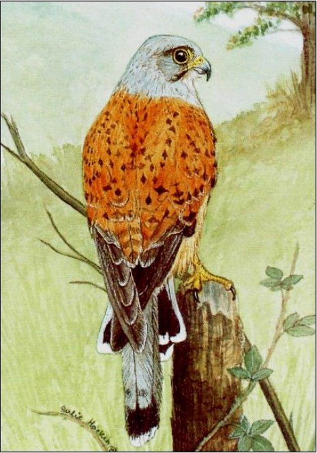 Pen - Kestrel