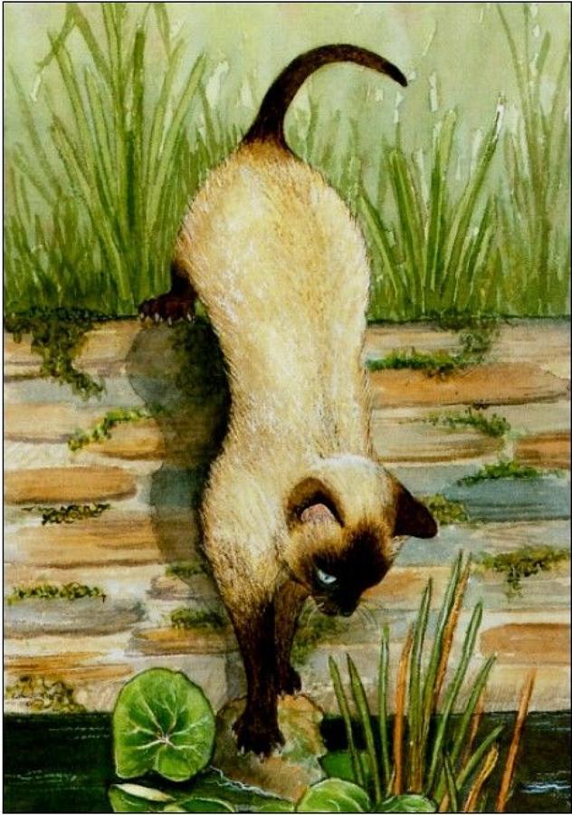 Pen - Siamese Cat
