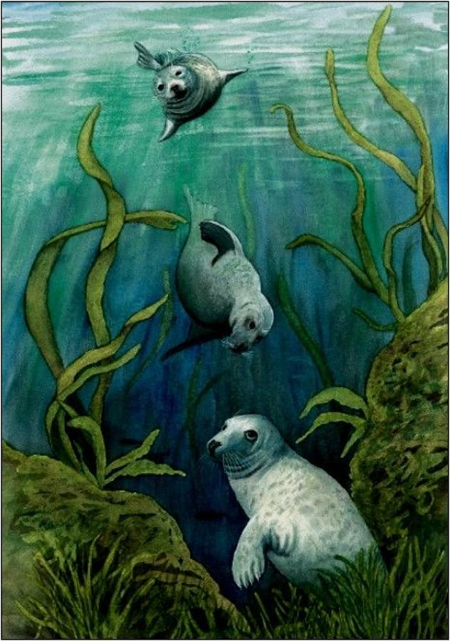 Pen - Grey Seals
