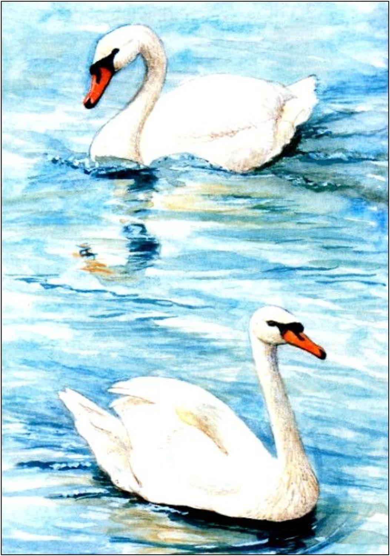 Pen - Mute Swan