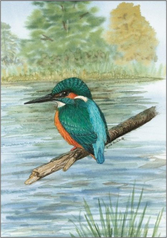 Pen - Kingfisher