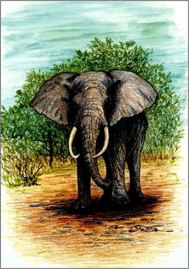 Pen - Elephant