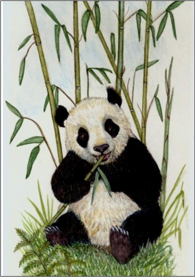Pen - Panda