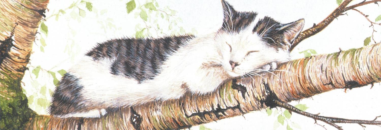 Tall Pad - Cat Nap