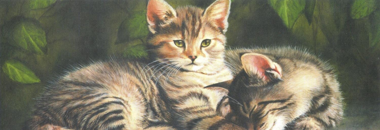 Tall Pad - Kittens on a Wall