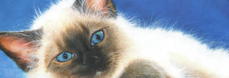 Tall Pad - Ole Blue Eyes