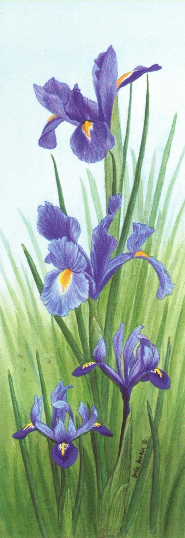 Tall Pad - Iris