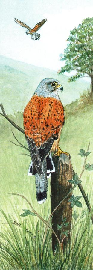 Tall Pad - Kestrel