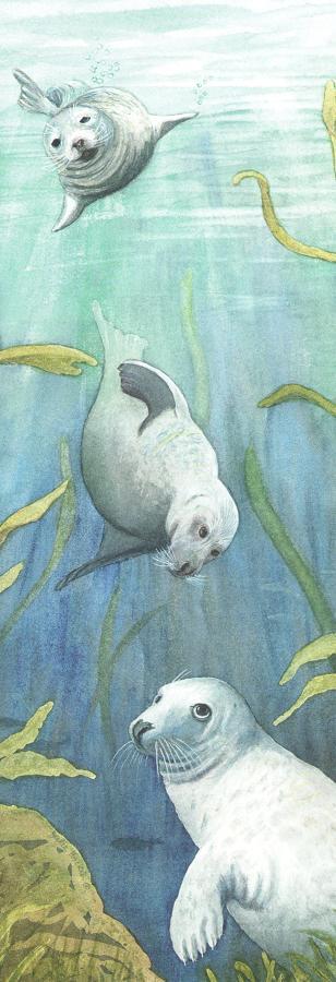 Tall Pad - Grey Seals