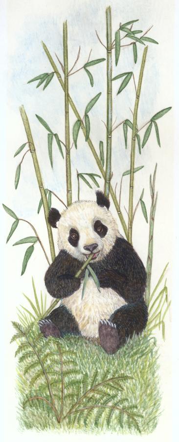 Tall Pad - Panda