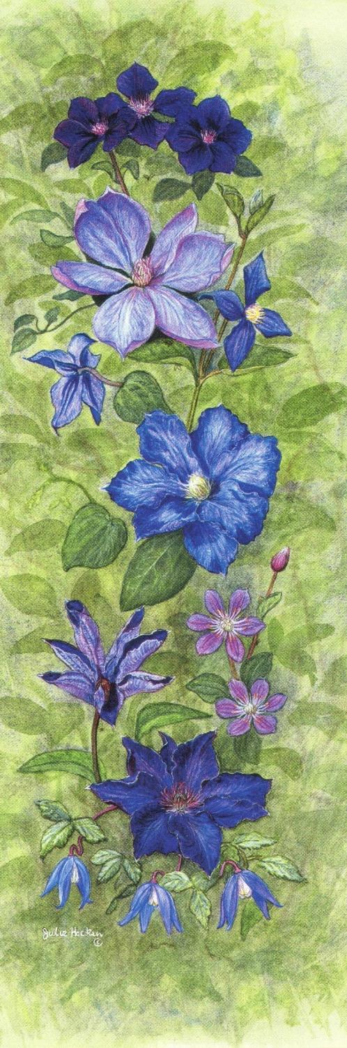 Tall Pad - Clematis