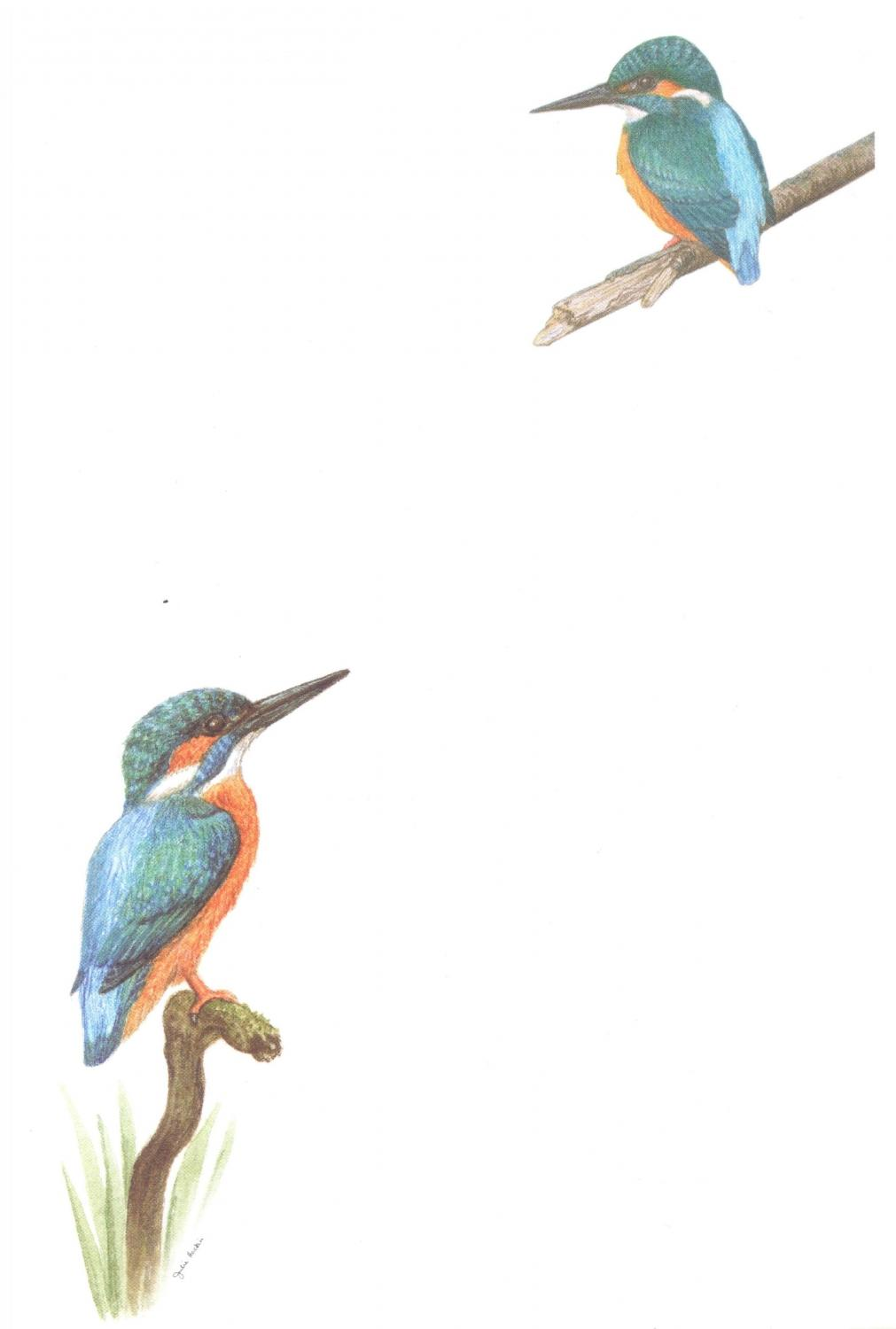 Notelets - Kingfisher