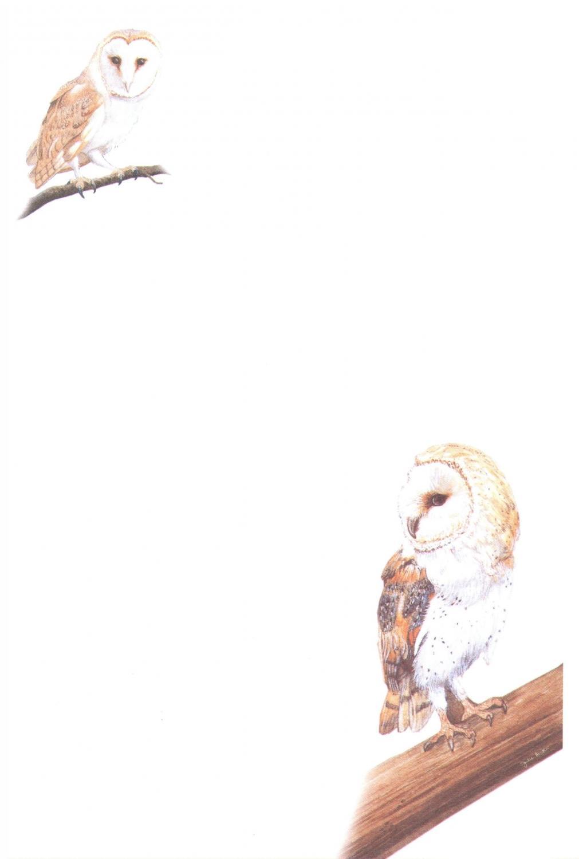 Notelets - Owls