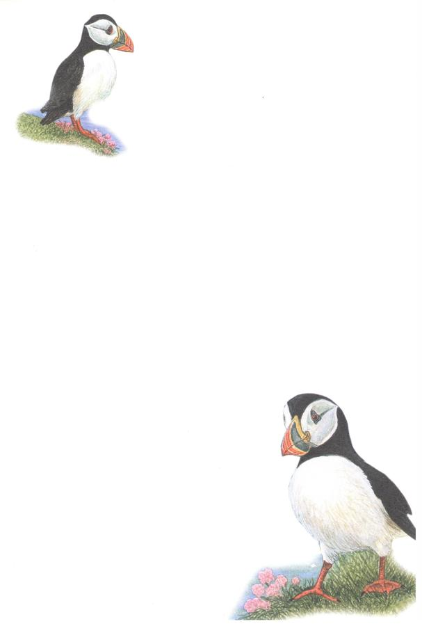 Notelets - Puffins