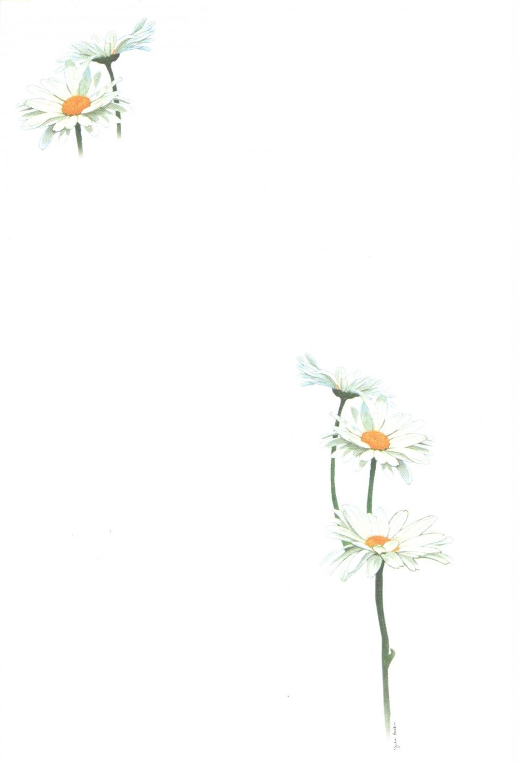 Notelets - Daisies