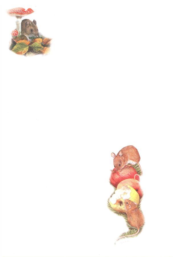 Notelets - Mice