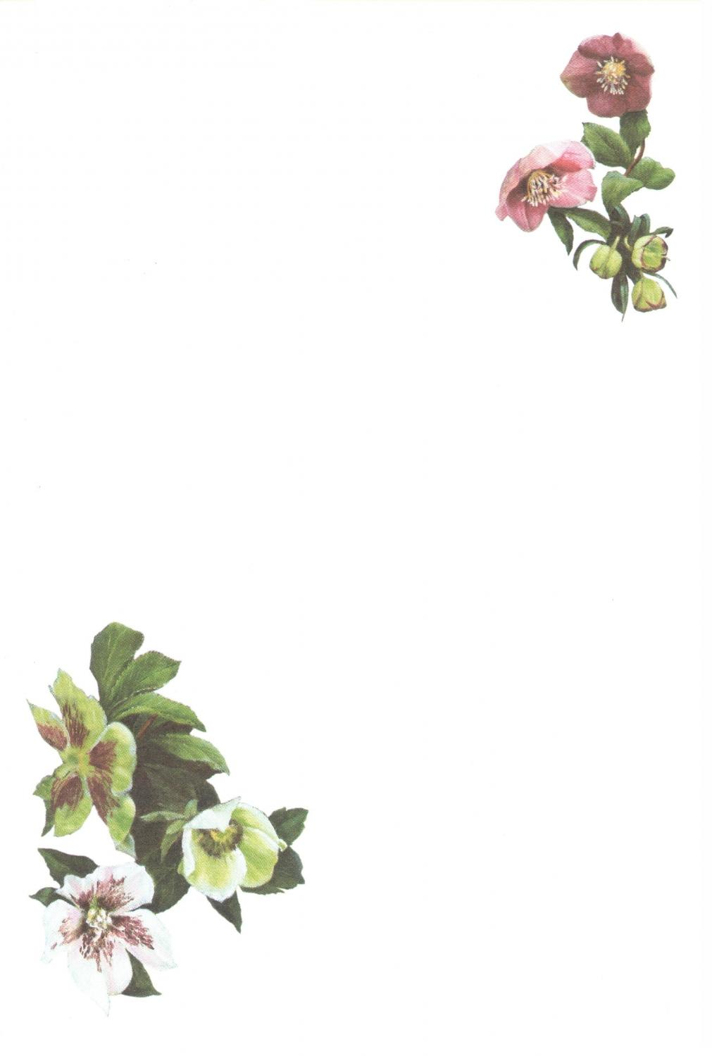 Notelets - Helebores