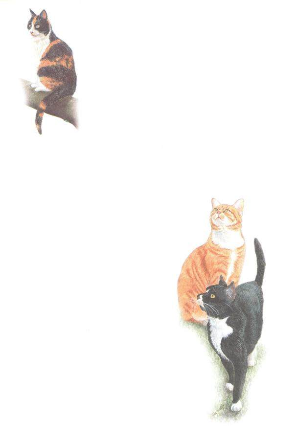 Notelets - Black & Ginger Cats