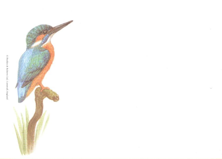 Sticky Notes - Kingfisher