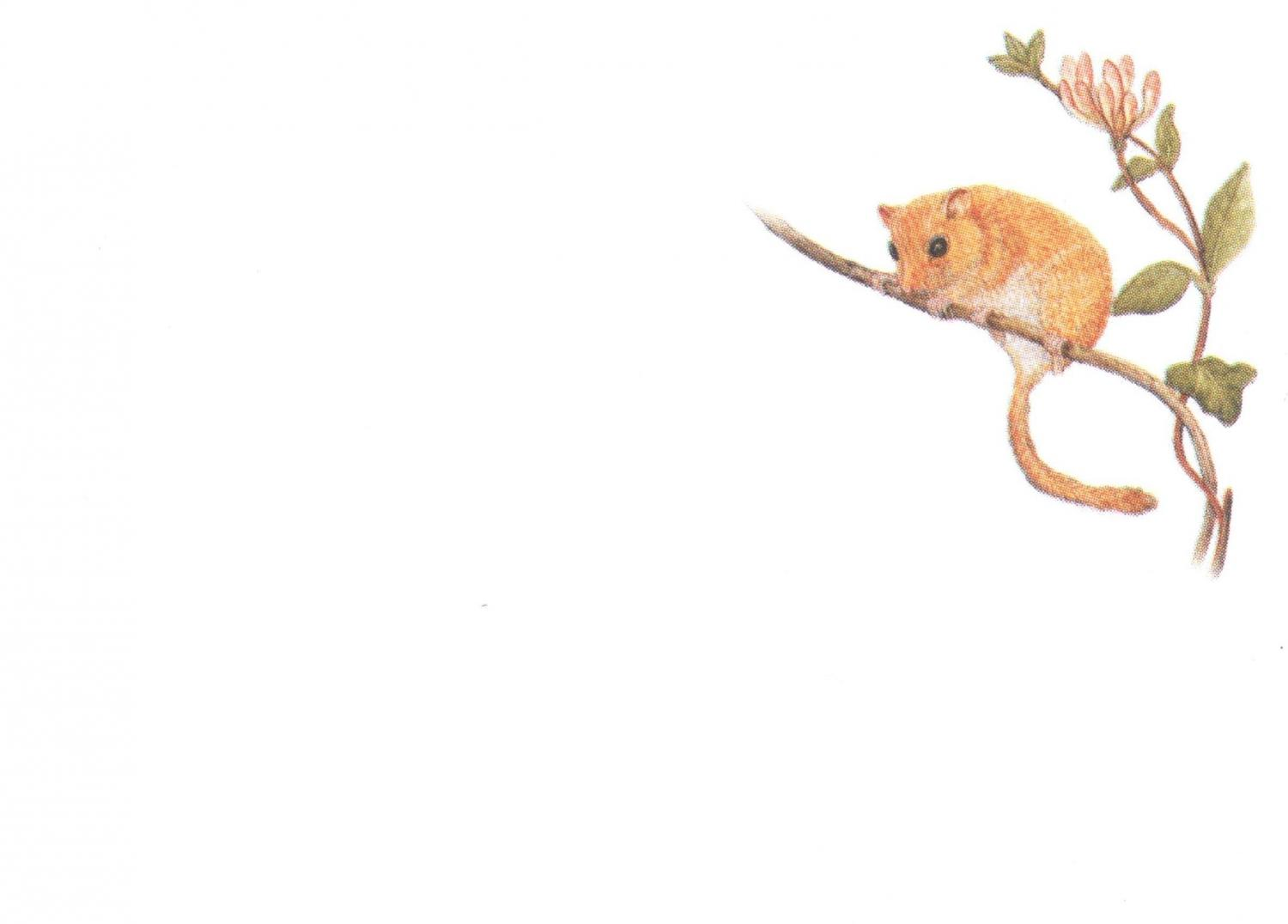 Sticky Notes in Holder - Dormouse