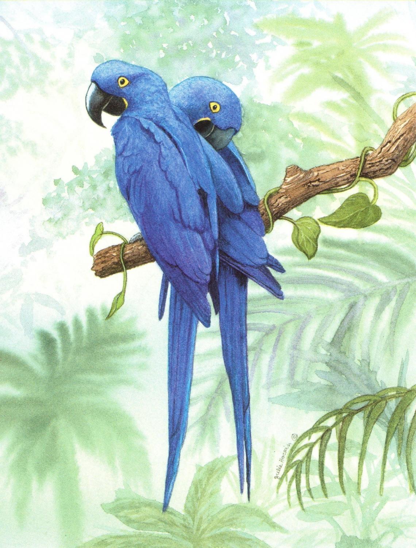 Magnetic Fridge Pad - Hyacinth Macaw