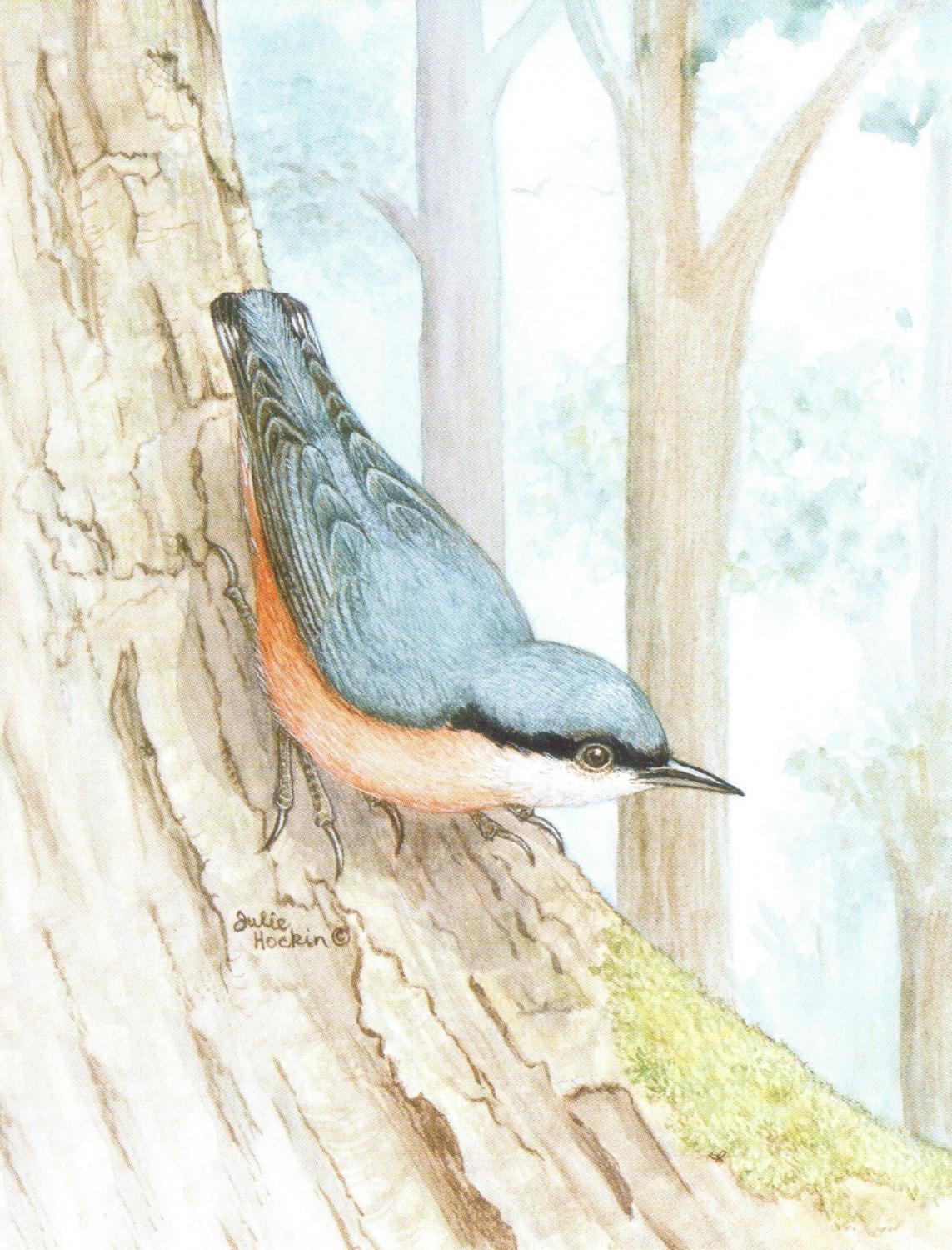 Magnetic Fridge Pad - Nuthatch