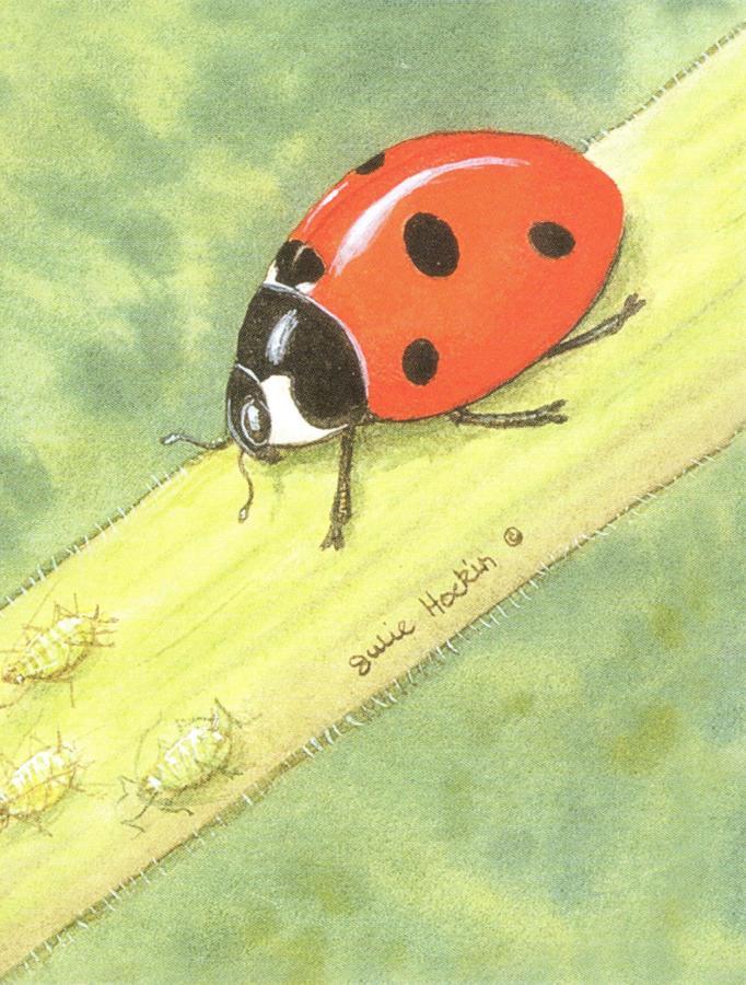 Magnetic Fridge Pad - Ladybird