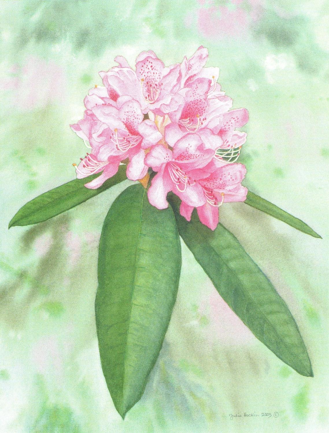 Magnetic Fridge Pad - Rhododendron