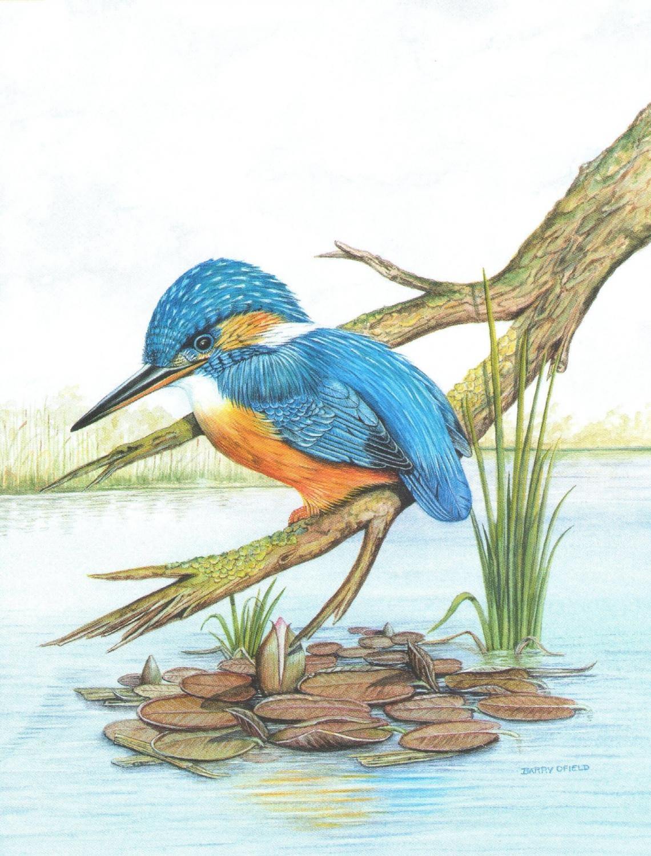 Magnetic Fridge Pad - Kingfisher & Lily