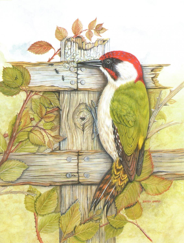 Magnetic Fridge Pad - Green Woodpecker