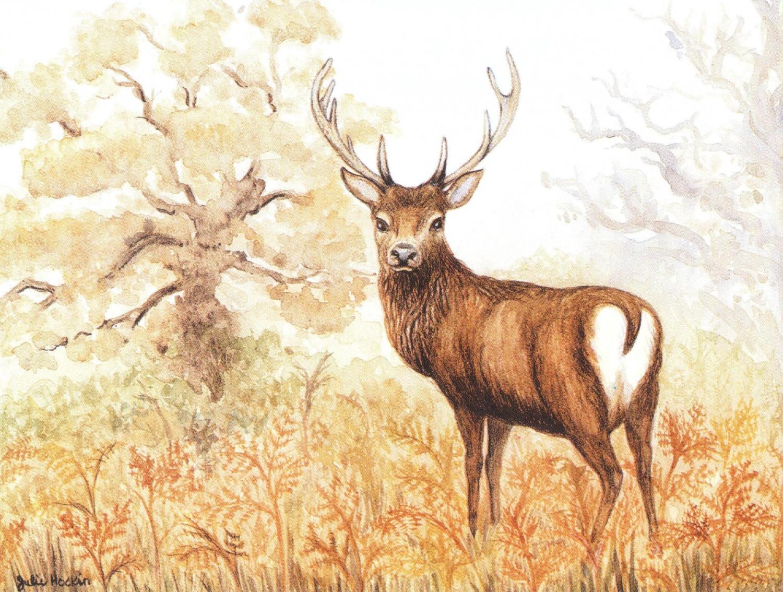 Magnetic Fridge Pad - Red Deer Stag