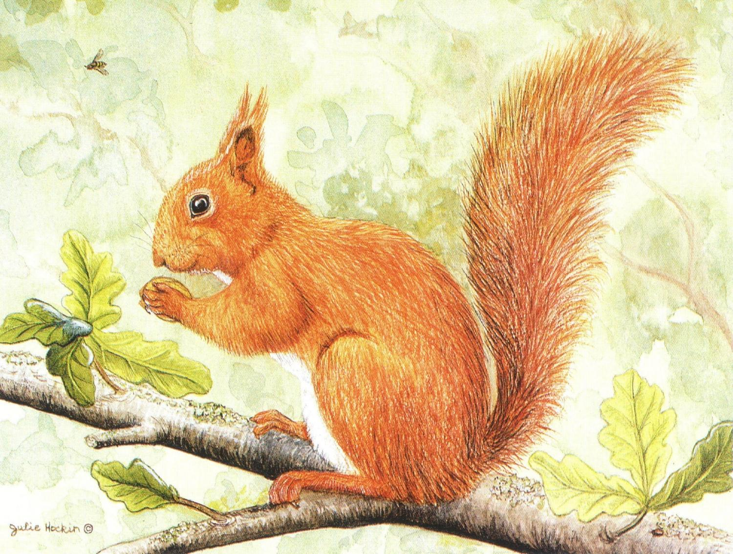 Magnetic Fridge Pad - Red Squirrel on Branch