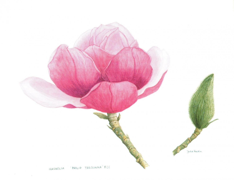 Magnetic Fridge Pad - Magnolia