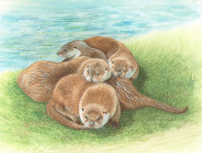 Magnetic Fridge Pad - Tangle of Otters