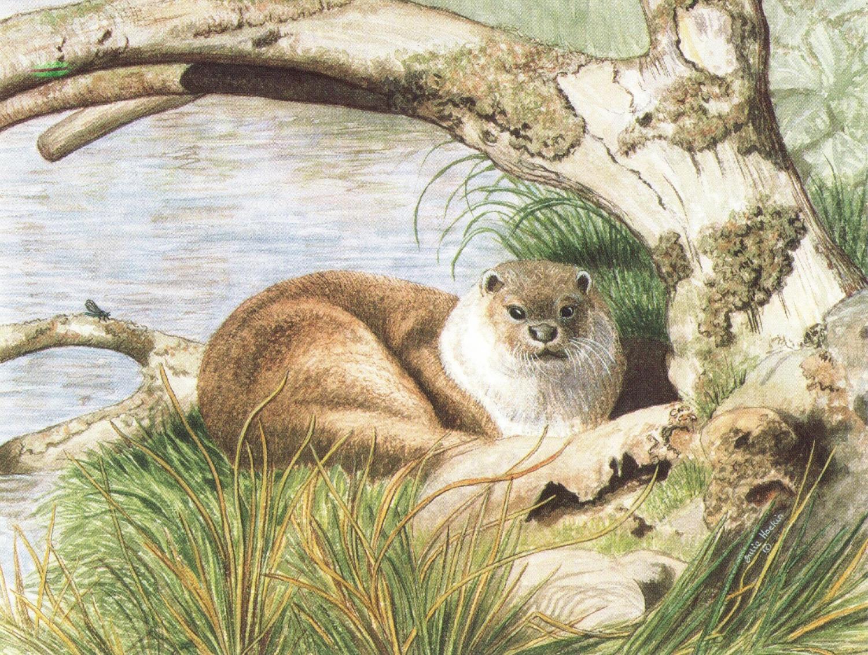 Magnetic Fridge Pad - Taw the Otter