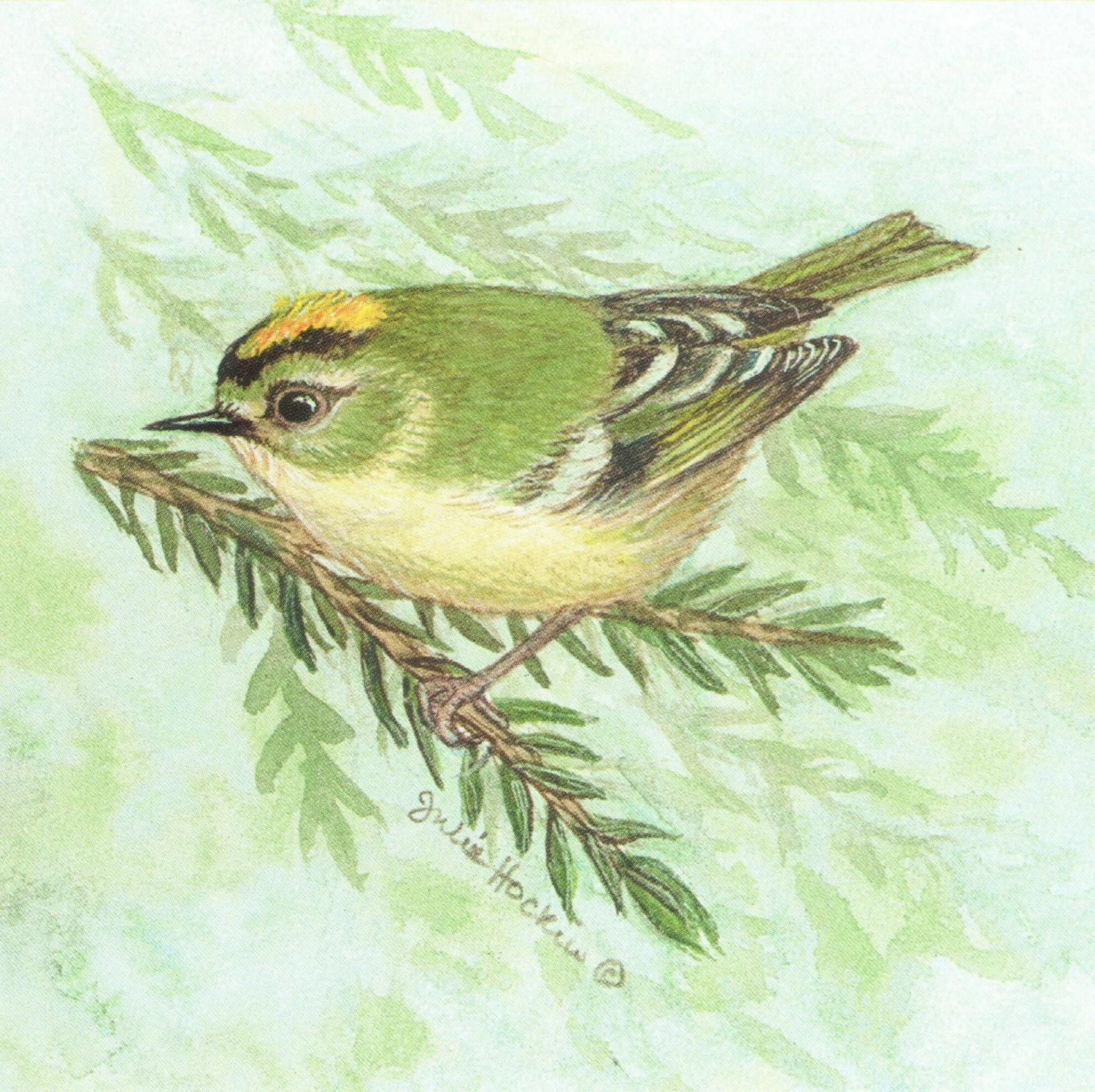 Small Magnetic Fridge Pad - Goldcrest
