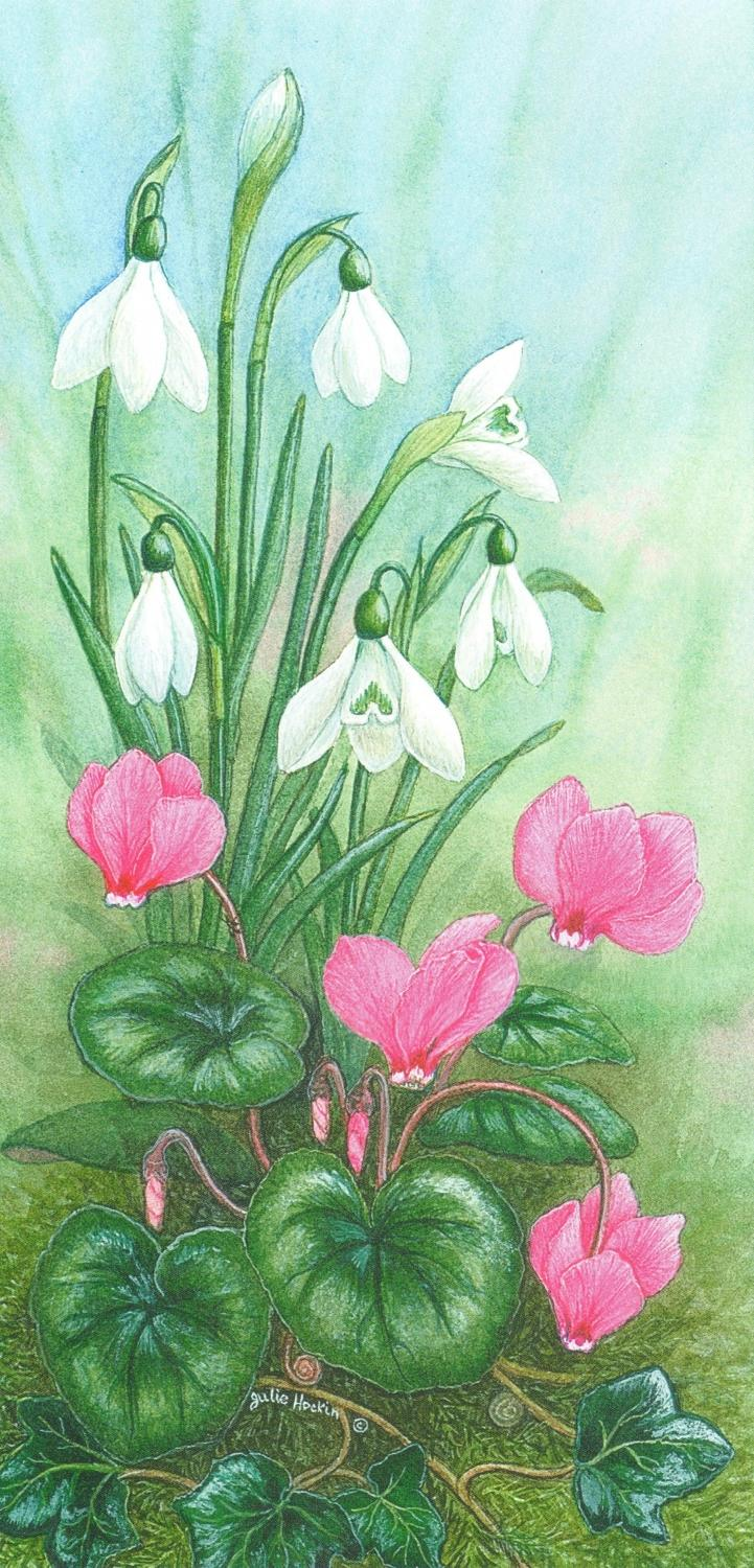 Tall Card - Cyclamen & Snowdrop