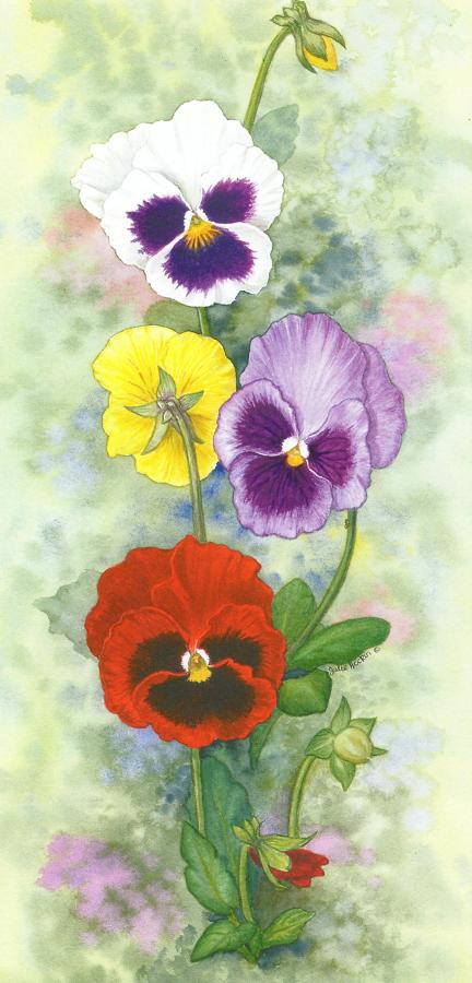 Tall Card - Pansy