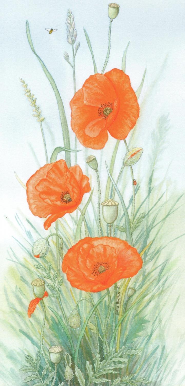 Tall Card - Poppy