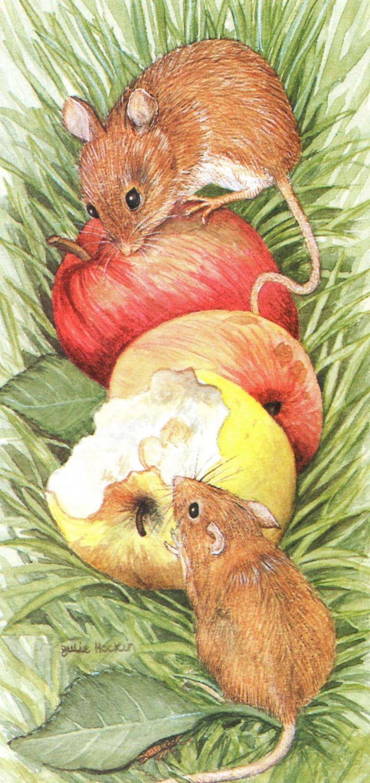 Tall Card - Field Mice