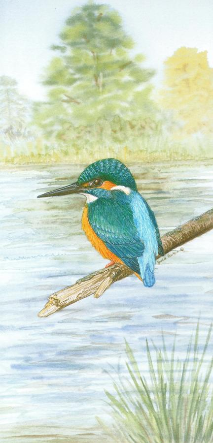 Tall Card - Kingfisher