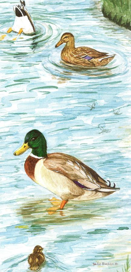 Tall Card - Mallard Ducks