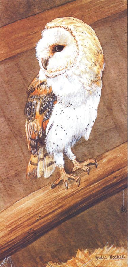 Tall Card - Barn Owl