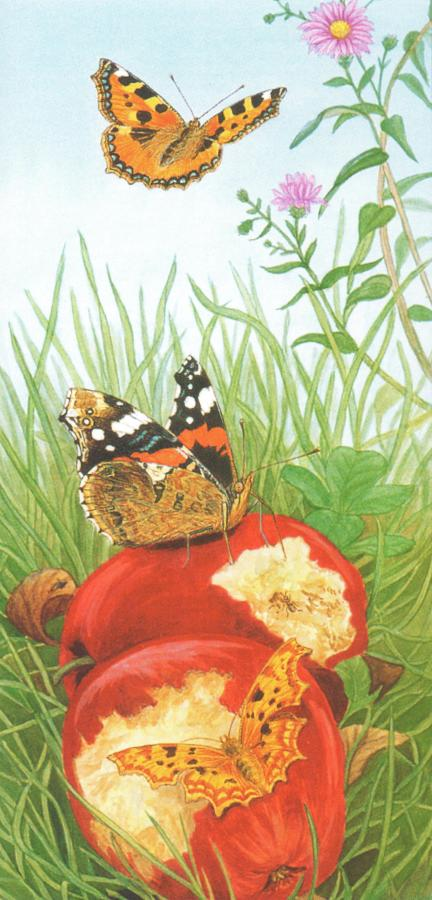Tall Card - Garben Butterfly