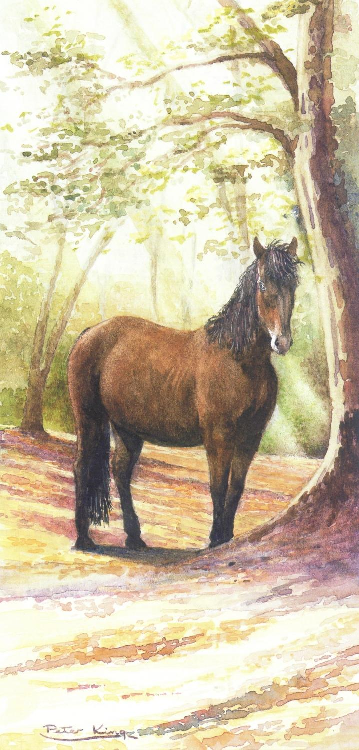 Tall Card - New Forest Pony