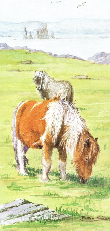 Tall Card - Shetland Pony