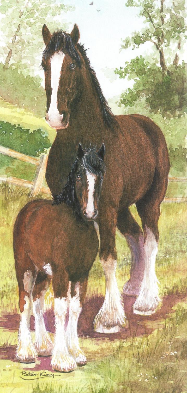 Tall Card - Shire Horse