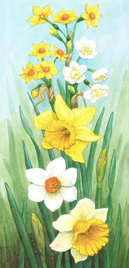 Tall Card - Daffodil